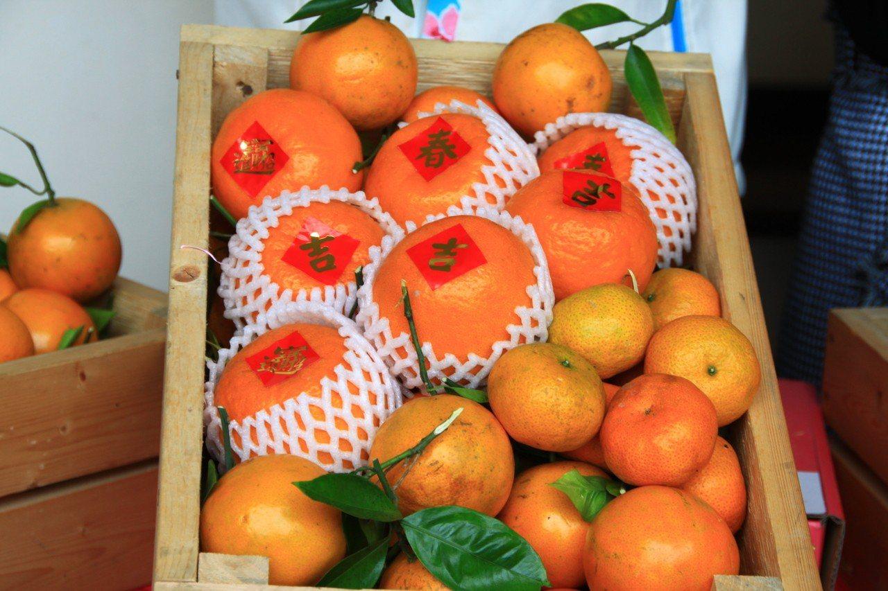 郭素玉說,今年柑橘產量比去年減少將近三分之一,柑桔的價格不錯。記者郭政芬/攝影