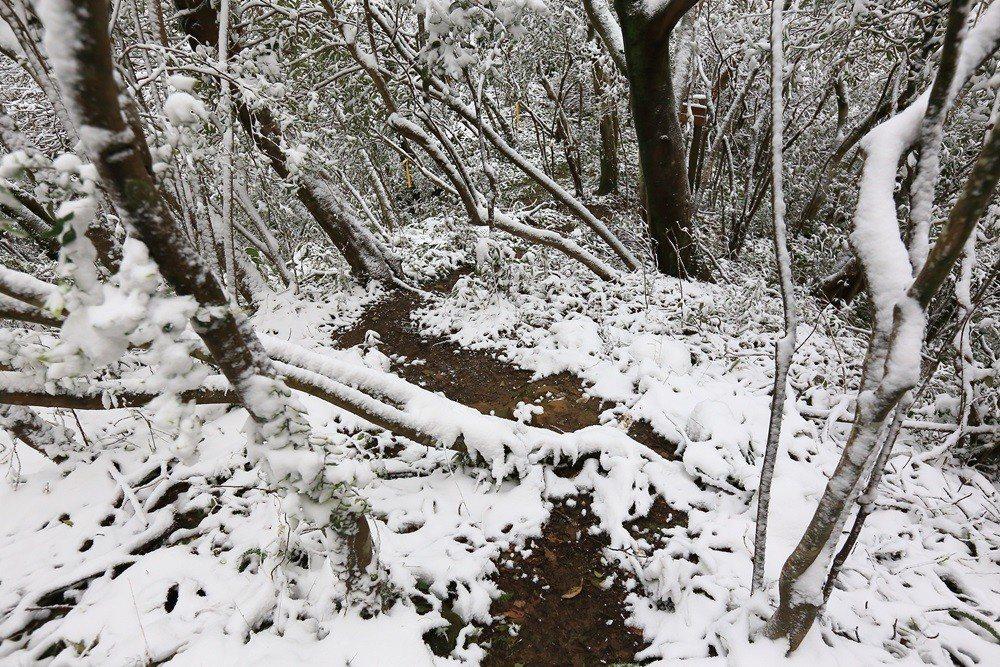 2016年1月的霸王寒流,連平溪山區都降下了白雪,這種低海拔降雪才是稀奇的事情。...