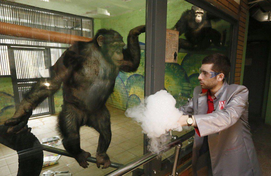窺見動物心智之窗的可能性,遠比想像中來得更多。圖為俄羅斯一隻11歲的黑猩猩正在看...