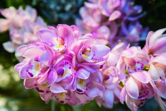 花藝產業不僅帶動農業成長,也讓生活 變得更繽紛。(攝影/劉德媛)