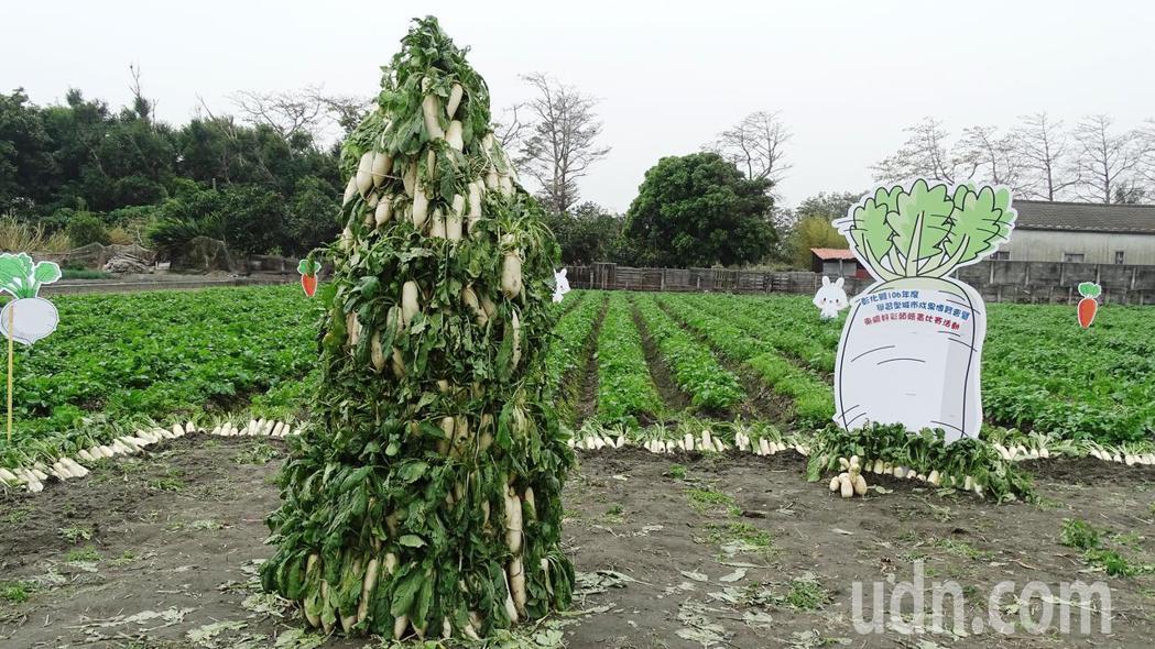 湖埔社區大學和縣府教育處21日在東螺溪生態教育園區,舉辦二千名親子拔蘿蔔和繪畫等生態教育活動。記者何烱榮/攝影