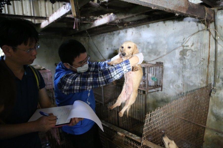 新北動保處在中和山區破獲非法私人狗場,查獲共21隻品種犬。圖/新北市動保處提供