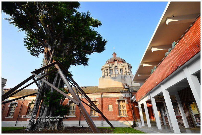 ↑舊法院中庭有一棵老榕樹,見證舊法院的歷史。