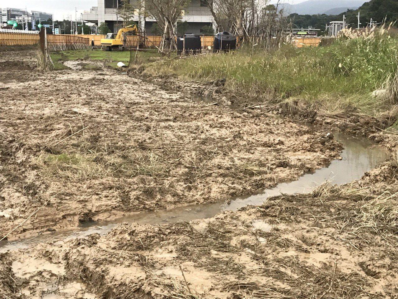 大巨蛋移樹工程一波三折,北部流行音樂中心南基地將作為33棵樹移植地點,竟傳出積淹...