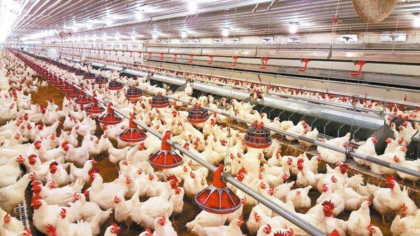 冬季是禽流感的好發期,明台產險結合政府撲殺補償機制,推出國內第一張家禽禽流感保單...