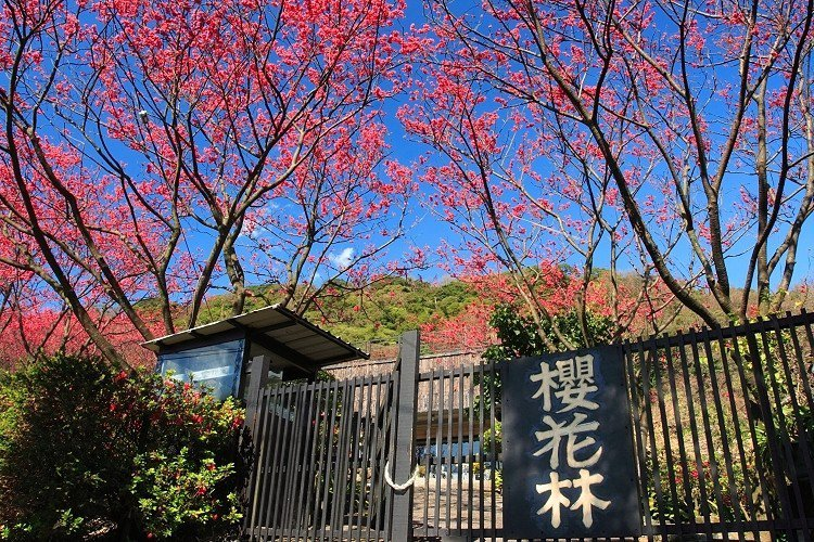 陽明山公園 allenhsu.roodo