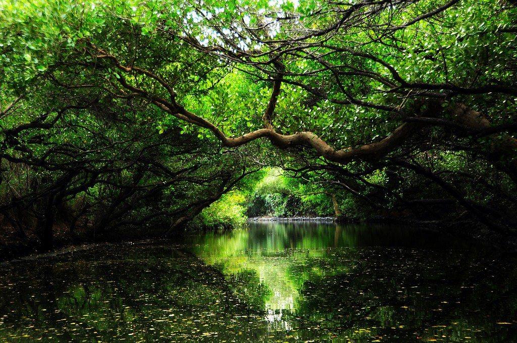 ▲台南-四草綠色隧道。(圖/攝影者:【丹尼斯®】, Flickr CC Lice...