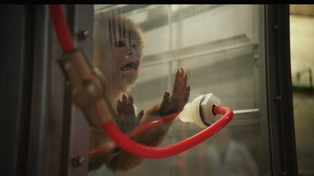 德國福斯汽車遭爆曾用猴子和人進行柴油廢氣排放試驗。Netflix