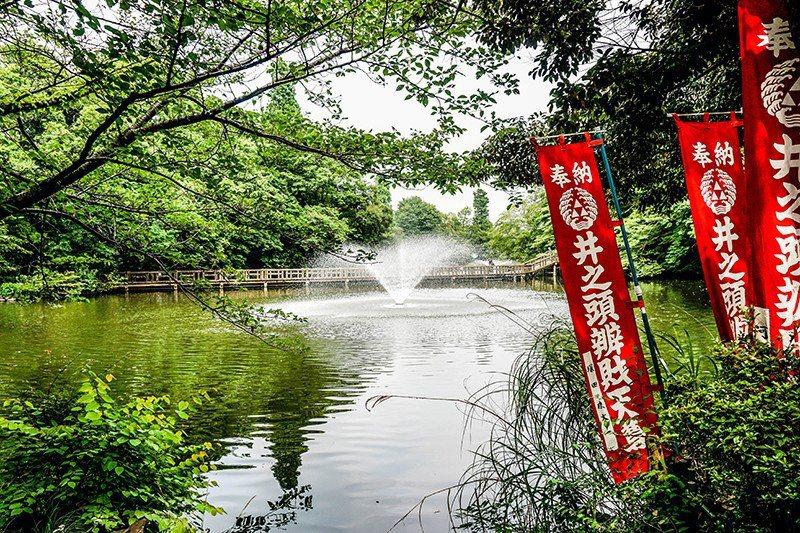 井之頭公園裡有許多靠近湖邊的長椅,能看到湖面的噴泉和岸邊低垂的樹影。坐在小堇最喜...