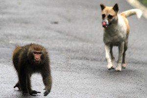 帶貓狗進森林遊樂區,是對寵物的友善還是對野生動物的危害?