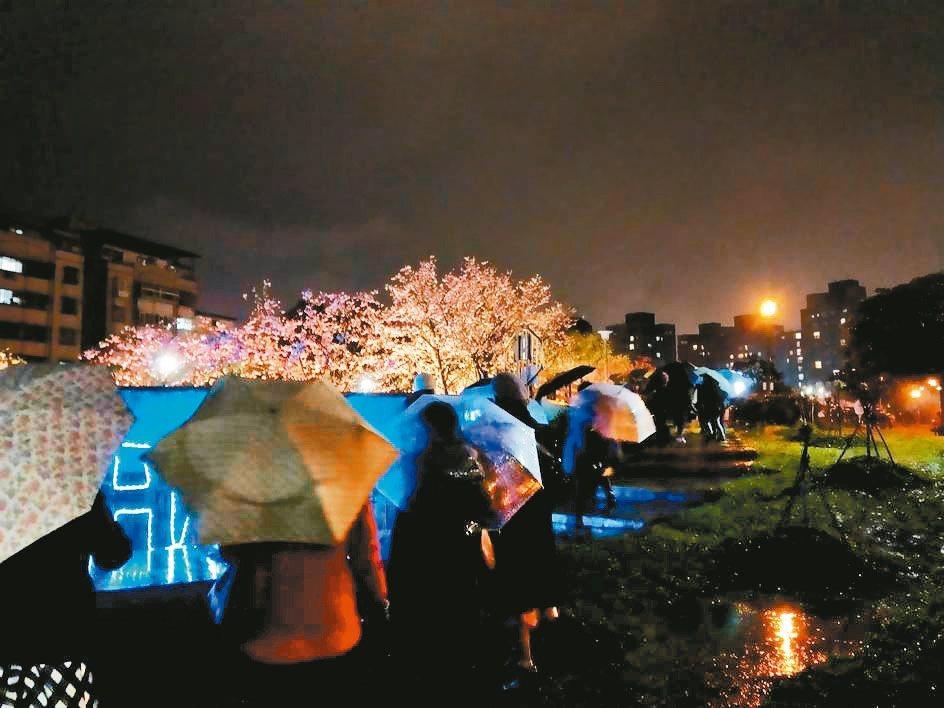 內湖樂活公園夜櫻昨起點燈展開,民眾冒雨觀賞。 圖/公園處提供