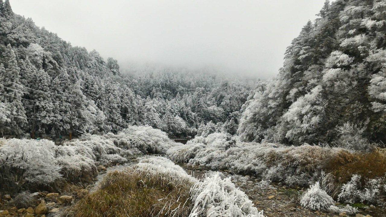 武陵與梨山已成白色世界。圖/居民提供