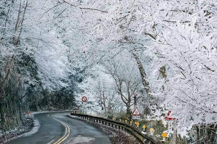 梨山武陵沿路已成白色世界。圖/居民提供
