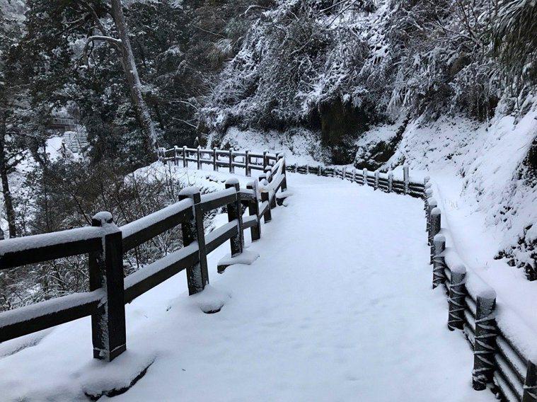 桃園市拉拉山神木區山區下大雪,雪景十分美麗,公路總局今早上午7時起開放遊客開車上...