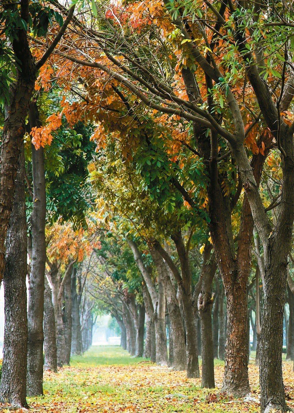 秋冬之際,世賢路與新民路的分隔島上的繽紛。 (圖/吳慧禎攝影)