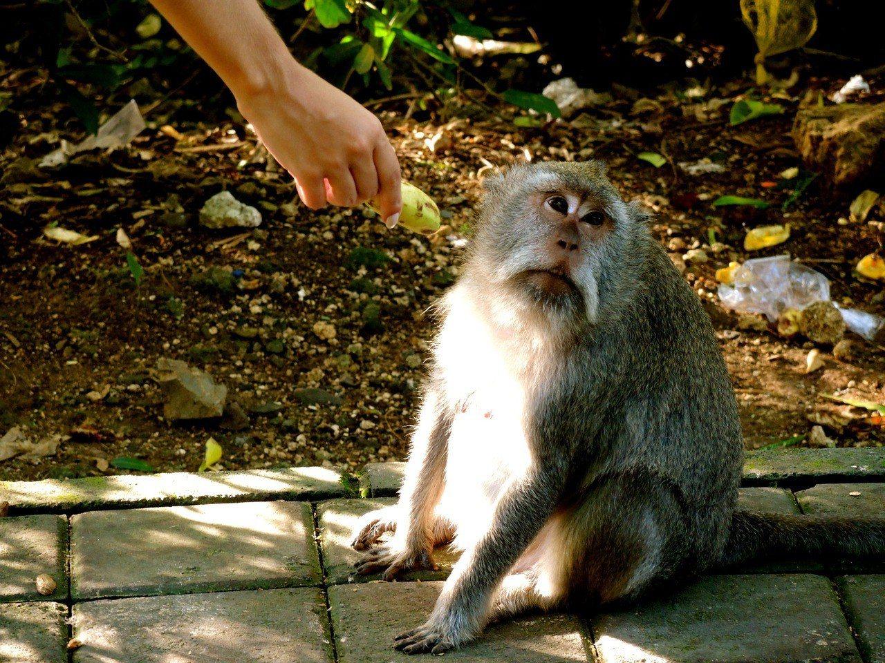 網友抱怨升職老闆只給3000元津貼,嘆「人吃多香蕉也會變成猴子的」。 圖/pix...