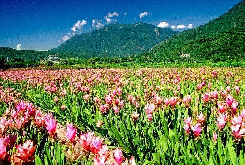 花蓮擁有「七大花海祕境」,讓民眾按圖尋訪花蹤。 業者/提供