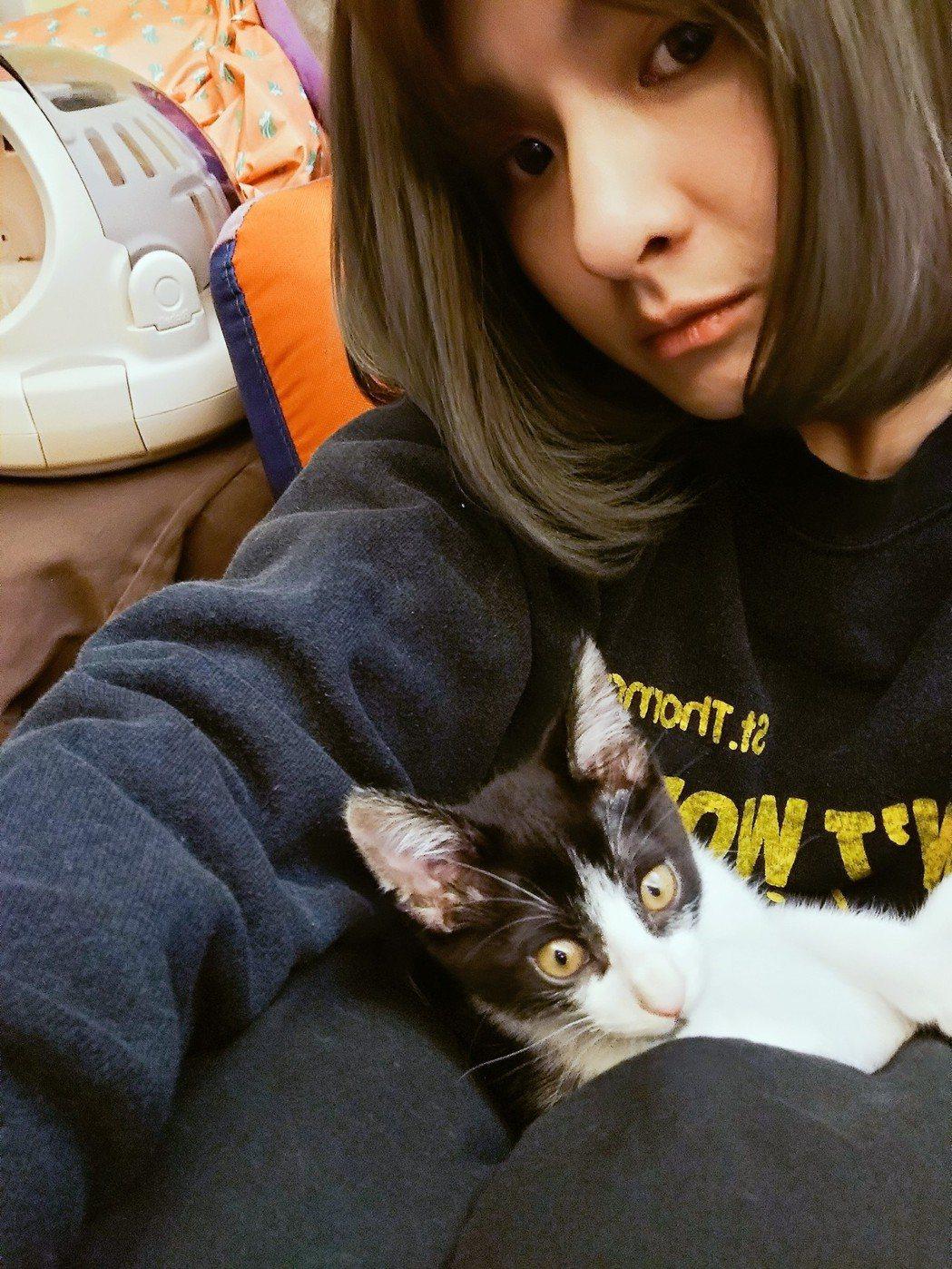 郭靜領養貓咪「七七」,讓家裡多了一位成員。圖/郭靜提供