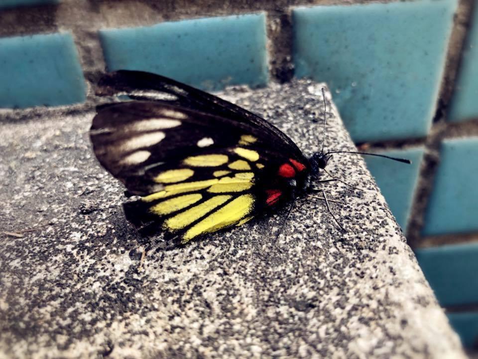 母親過世後,吳克群在工作現場見到不願飛走的蝴蝶。 圖/擷自吳克群臉書
