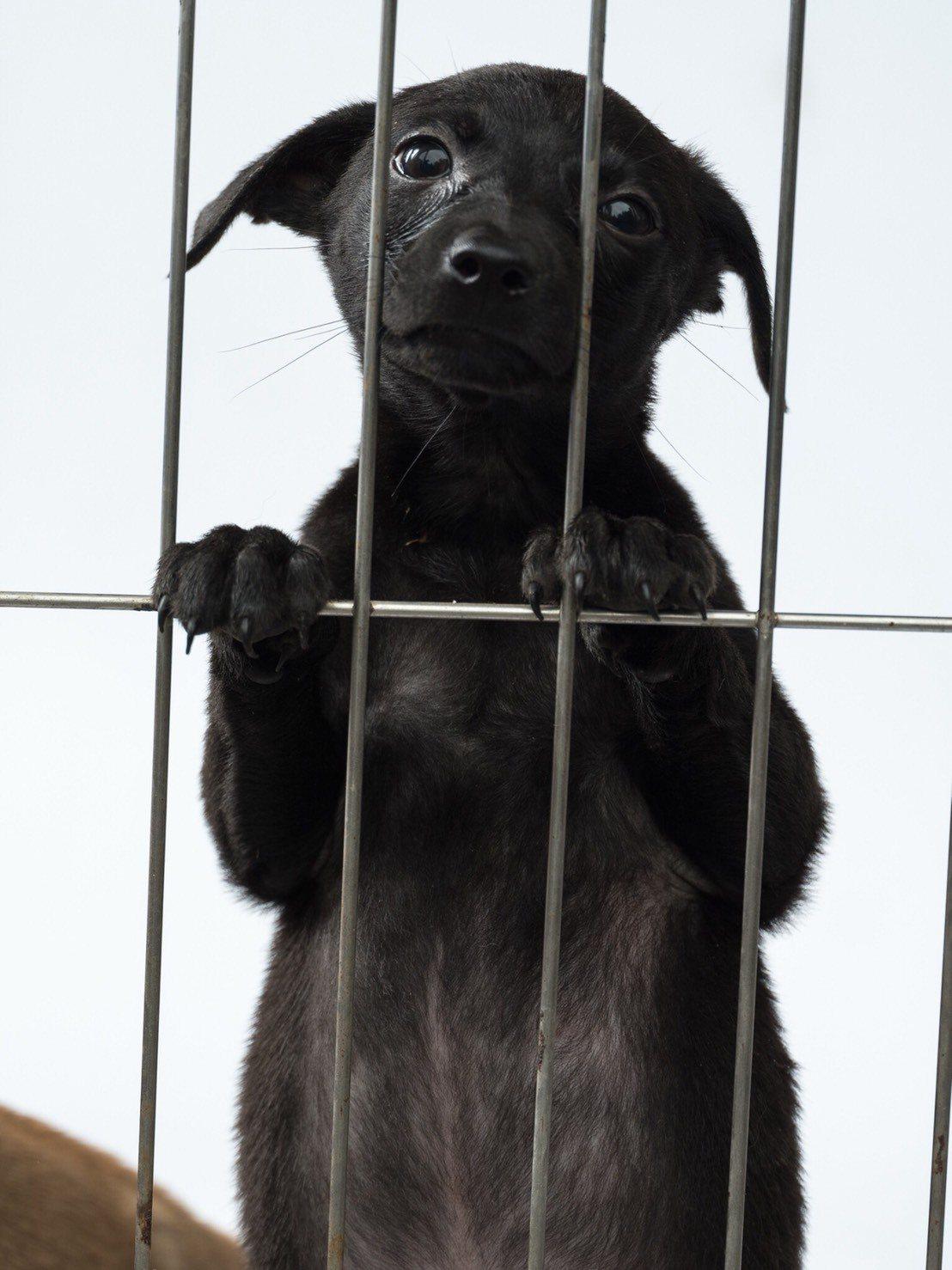 零撲殺政策上路周年,由於配套不足,造成地方防疫所「狗滿為患」,人犬衝突不斷,部分...
