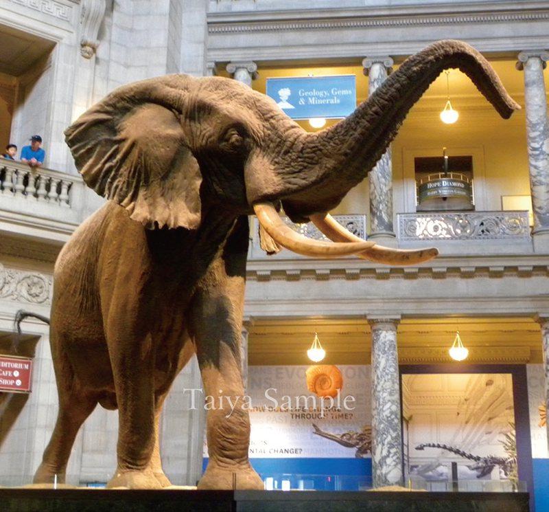 大堂的非洲象標本
