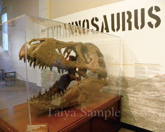 巨大的恐龍頭部骨骼