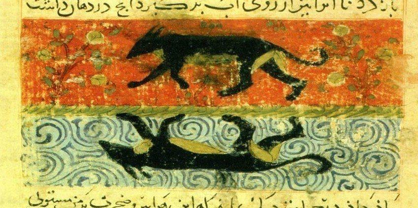 少數紀錄甚至還有穆罕默德下令在麥地那「屠盡全城之狗」,或聲稱「黑狗是惡魔,是眾犬...