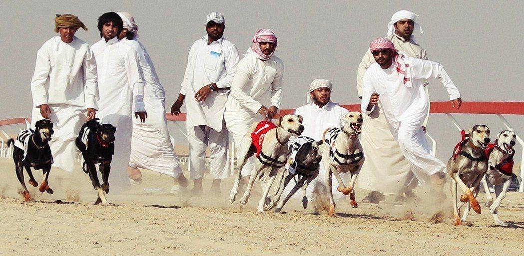 眾人結合阿拉伯傳統狩獵的名目與歐洲的動物競技,竟也以「沙漠文化祭」為名,發展起了...