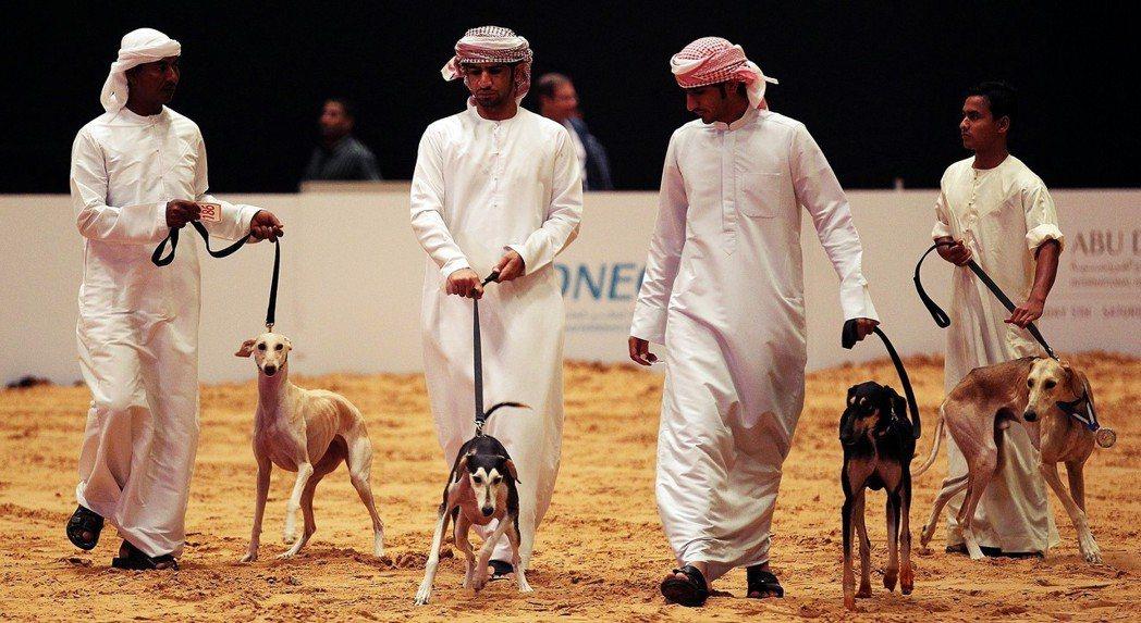 飼養寵物狗的新興階級逐漸崛起。圖為阿布達比的年度「狩獵博覽會」,圖中的狗即是當前...