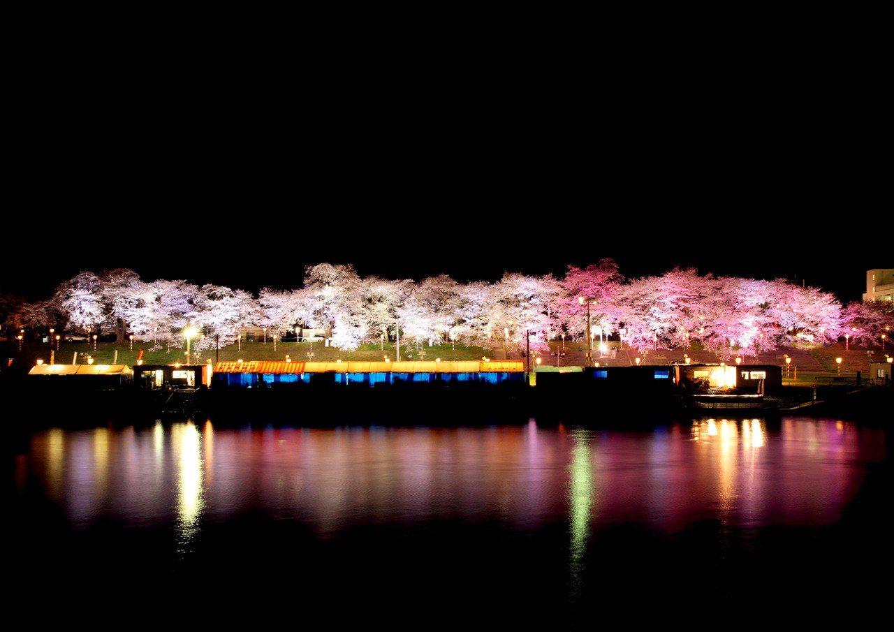 ▲日本宮城大河原櫻花祭。(圖/Tripbaa趣吧!達人帶路)