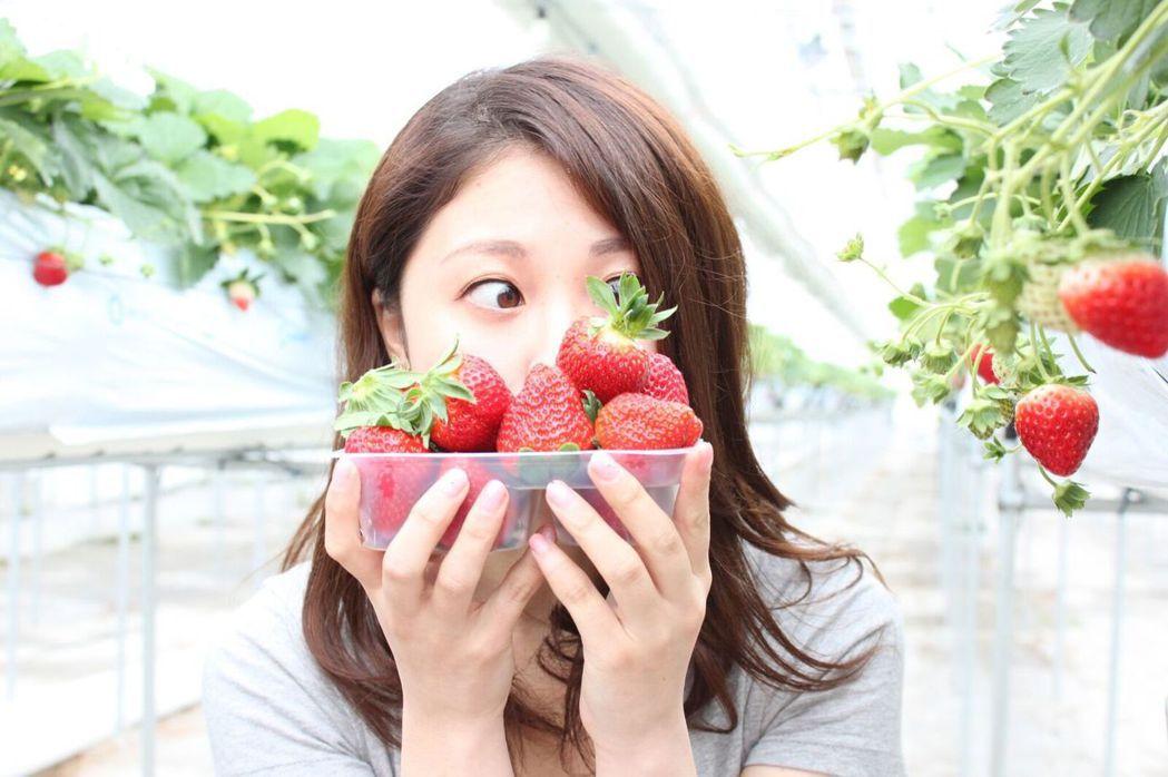 ▲日本宮城採草莓。(圖/©GRA Inc.)