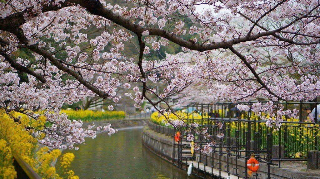 ▲京都山科疏水。(圖/攝影者:Hotice Hsu, Flickr CC Lic...