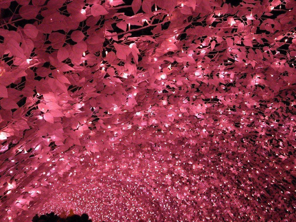 ▲三重名花之里櫻之隧道。(圖/攝影者:bizmac, Flickr CC Lic...