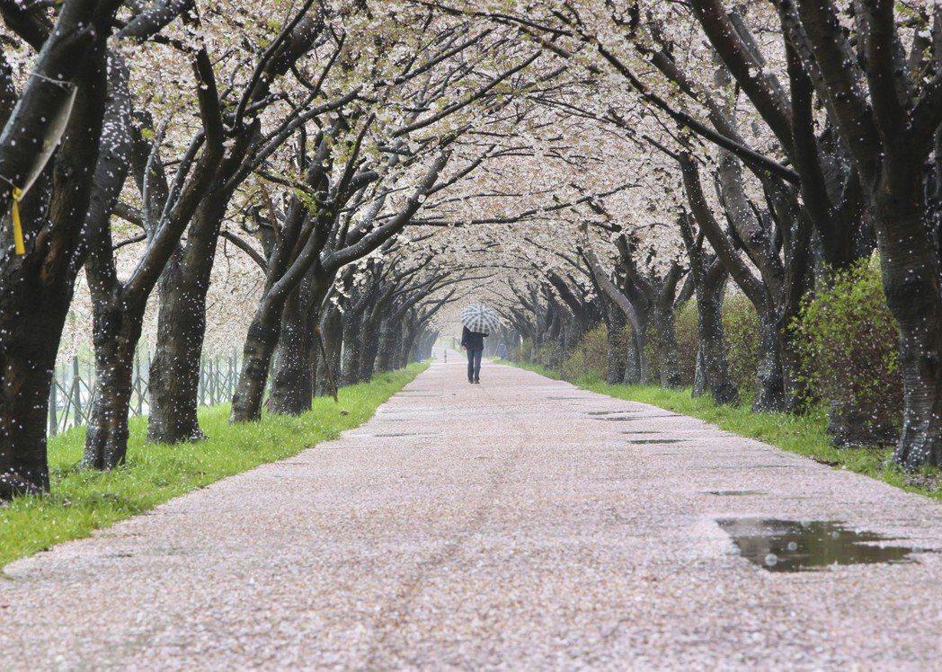 ▲釜山三樂江邊公園。(圖/釜山觀光公社)