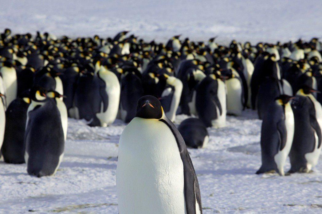 南極的迪蒙·迪維爾有許多企鵝。路透