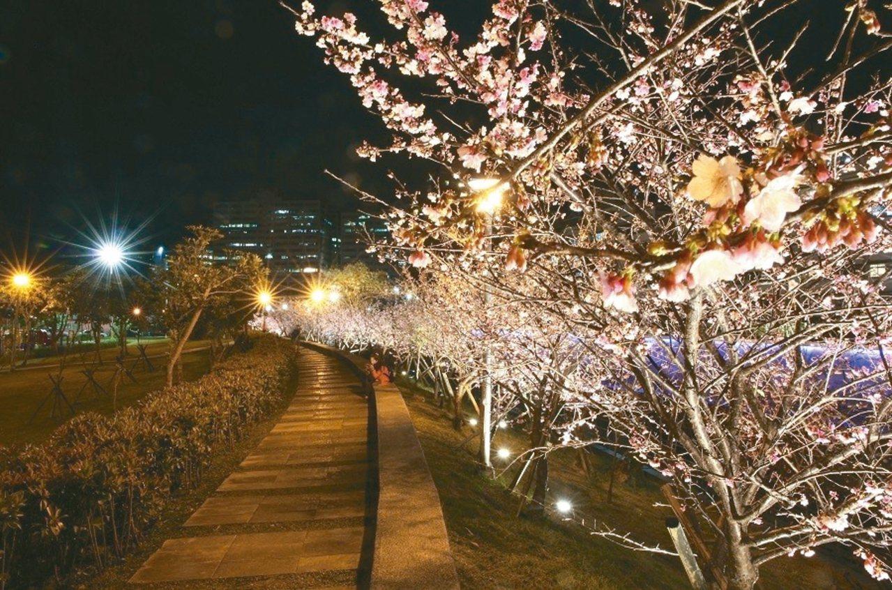 樂活公園賞夜櫻。 圖╱台北市政府提供