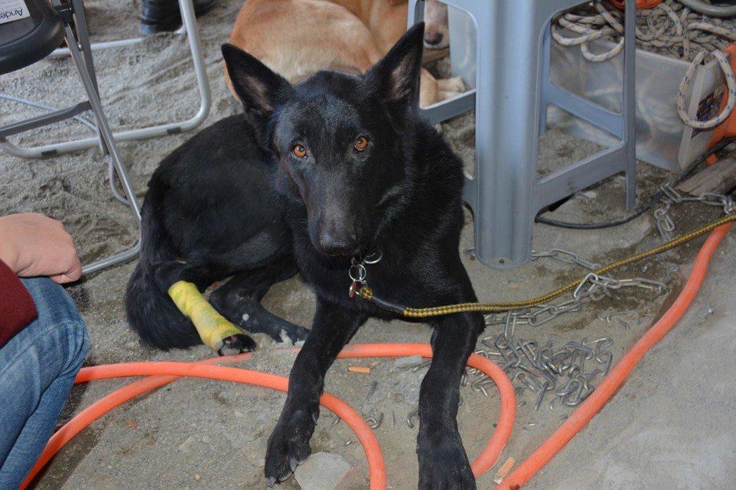前年,搜救犬sunny在維冠金龍大樓倒塌現場被鋼筋切傷腳,包紮後又投入任務,令人...