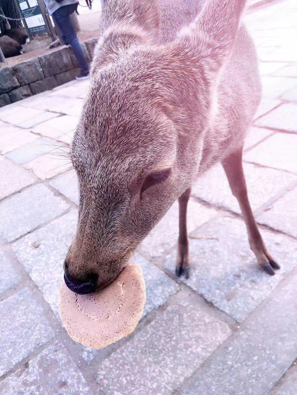 活動共分四個組別(靚景、飲食、可愛、創意),奈良公園的小鹿吃著餅乾的可愛模樣,正...