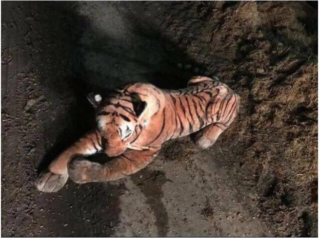 驚傳老虎闖入牛舍,警方獲報後趕到現場與老虎對峙45分鐘,結果竟是隻老虎布偶。...