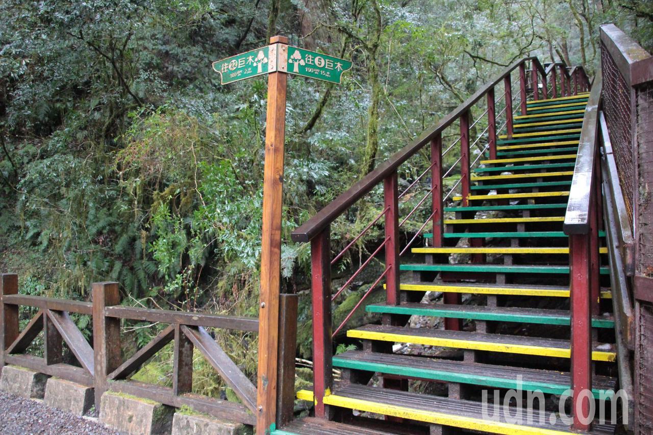 桃園市復興區拉拉山自然保護區,3年前受到颱風影響,造成園區內步道嚴重毀損,林務局...