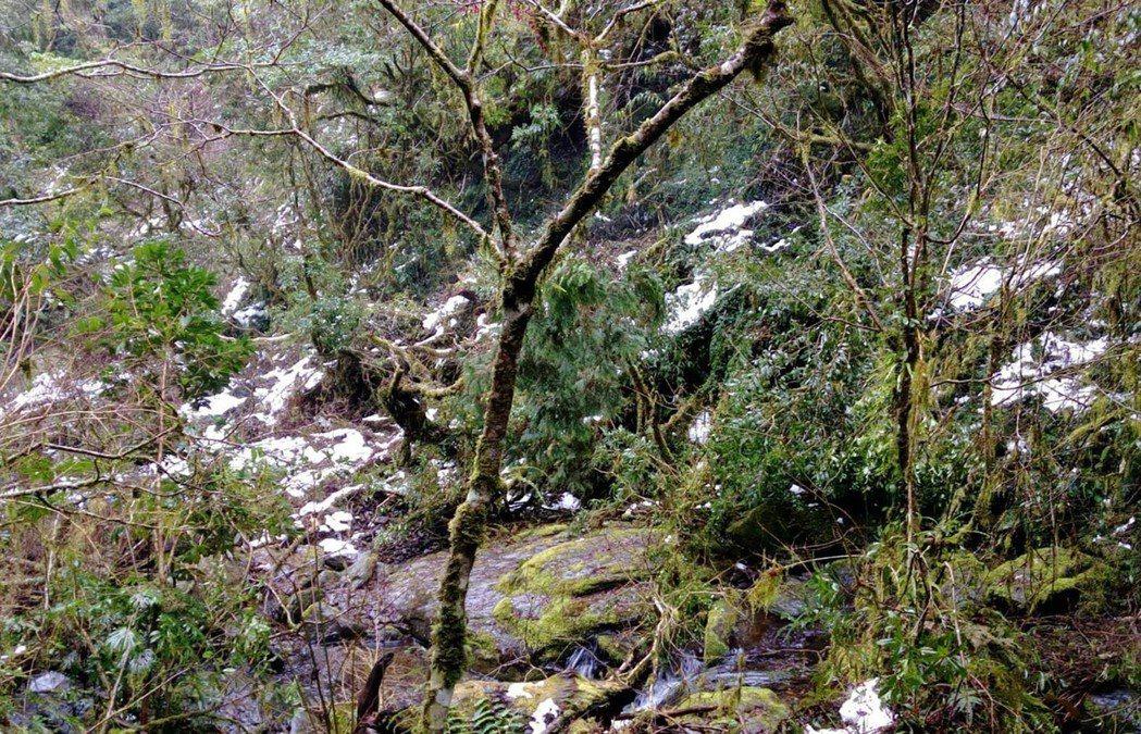 寒流來襲,桃園市復興山區清晨低溫下探,拉拉山區、林間許多上波寒流積雪未融,點綴山...