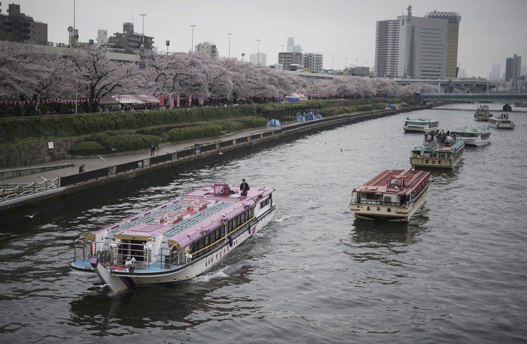 日本賞櫻,是許多人每年的必遊景點。美聯社資料照