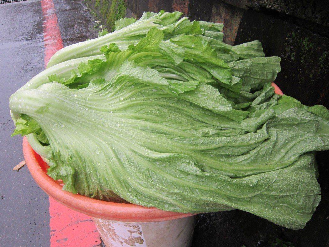 芥菜是冬天的時令菜。如果將之清炒,吃起來有些微的芥末味,有點嗆鼻。如果清洗切碎,...