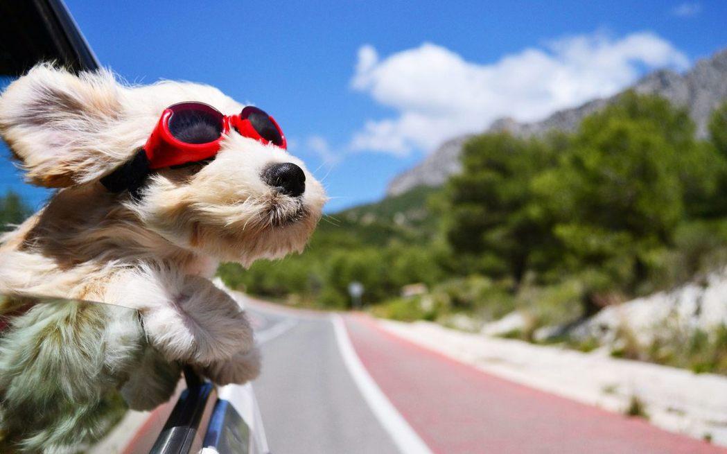 帶寵物過年出遊,準備事項不可少。 圖/截至網路