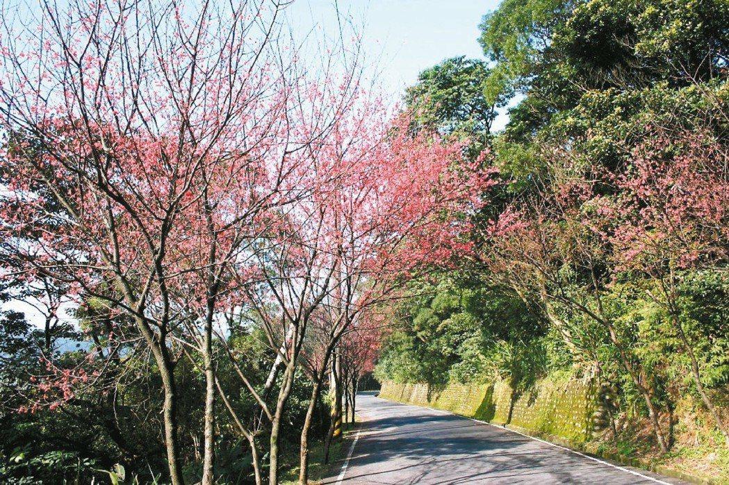 三芝鄉公所結合鄉內景點推出賞櫻專車。圖/三芝鄉公所提供