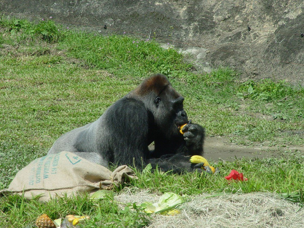 市府「i-Voting」新提案「動物園可以增加不對外開放的時間嗎?」歡迎民眾投票...