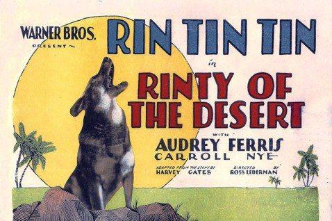 德國牧羊犬「任丁丁」主演的美國電影,形塑了20年代以後的大眾文化歷史記憶。 圖/...