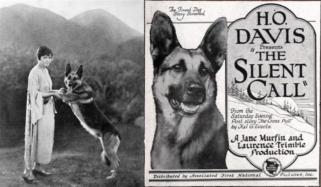 任丁丁的前輩、德國牧羊犬「強心」,算是好萊塢最早的狗明星。 圖/維基共享
