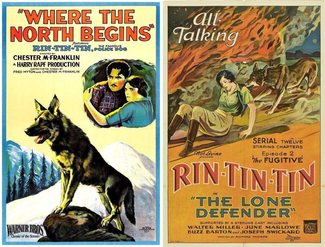 任丁丁總共拍了29部電影,牠的戲路多半是勇敢聰明的忠犬夥伴、或是拯救人類的英雄角...