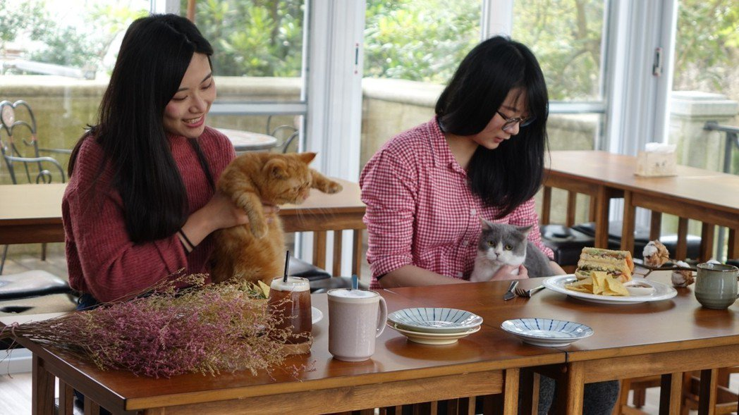 東森山林在飯店內開了寵物主題餐廳-「貓森」,讓入住東森山林寵物專案的毛家庭一同在...